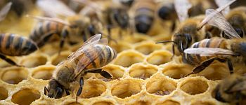 Überwinterung auf eigenem Honig