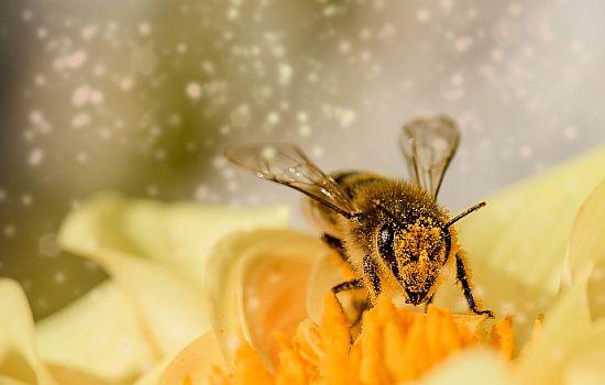 Wie profitieren Bienen von der Stadt als Lebensraum