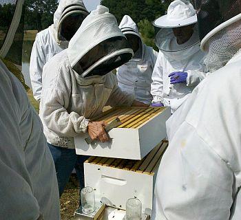 Beekeeper Basic