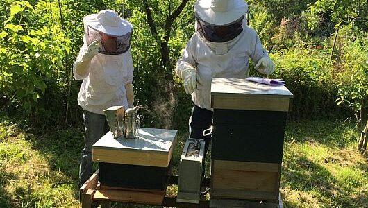 Beekeeper Imkerkurs Kurs für Imker