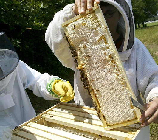 beekeeper_imkerkurs_schnupperkurs_neuimker