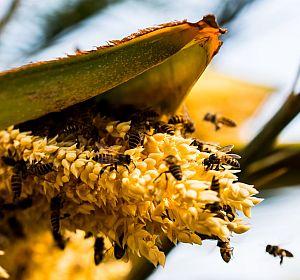beekeeping_bienenhaltung_ökologisch