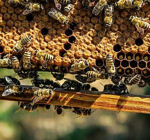 beekeeping_bienenhaltung_einfach