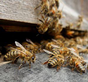 beekeeping_bienenhaltung_flexibel