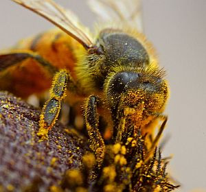 Wichtigkeit der Bienen